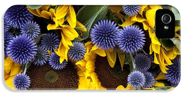 Agriculture iPhone 5 Cases - Allium and sunflowers iPhone 5 Case by Jane Rix