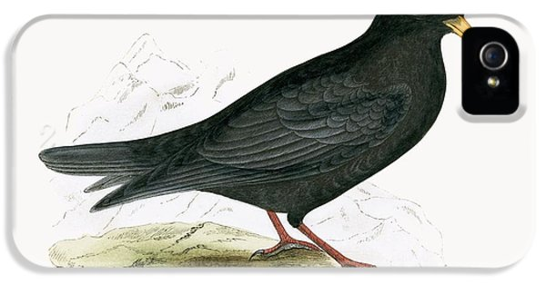 Alpine Chough IPhone 5 / 5s Case by English School