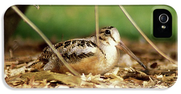 American Woodcock IPhone 5 / 5s Case by John Burk
