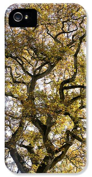 Ancient Autumn Oak IPhone 5 / 5s Case by Tim Gainey