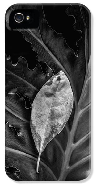 And I Will Catch You If You Fall IPhone 5 / 5s Case by Tom Mc Nemar