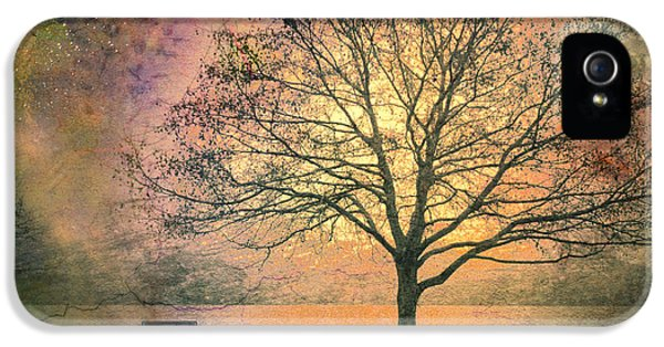 Trees iPhone 5 Cases - And the Morning is Perfect in all Her Measured Wrinkles iPhone 5 Case by Tara Turner