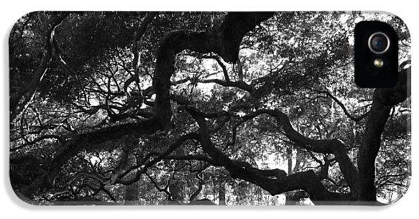 Beautiful Old Tree iPhone 5 Cases - Angel Oak Limbs BW iPhone 5 Case by Susanne Van Hulst