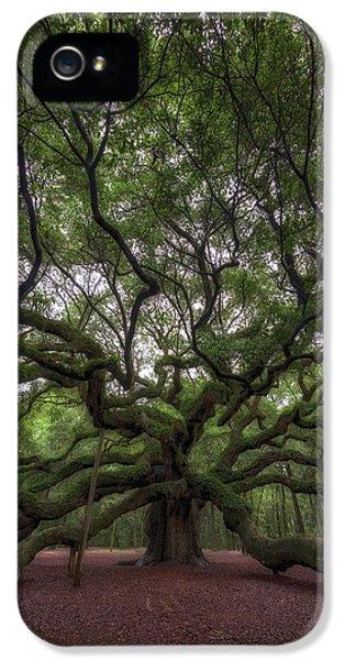 Angel Oak Tree, Charleston, Sc IPhone 5 / 5s Case by Rick Berk