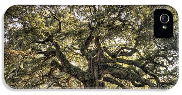 Angel iPhone 5 Cases - Angel Oak Tree Live Oak  iPhone 5 Case by Dustin K Ryan