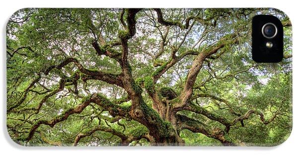 Angel Oak Tree Of Life IPhone 5 / 5s Case by Dustin K Ryan