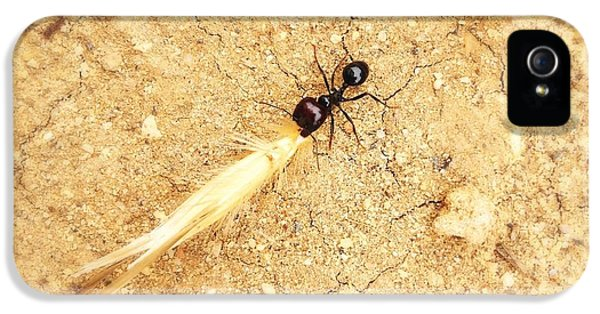 Ants iPhone 5 Cases - Ant At Work iPhone 5 Case by Marco Oliveira