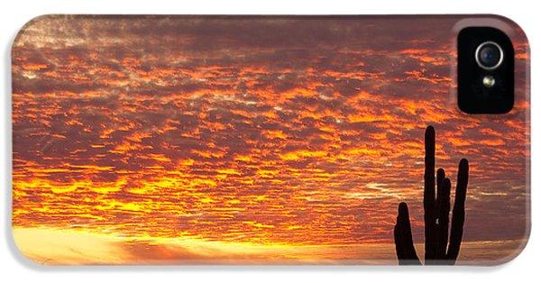 Arizona November Sunrise With Saguaro   IPhone 5 / 5s Case by James BO  Insogna