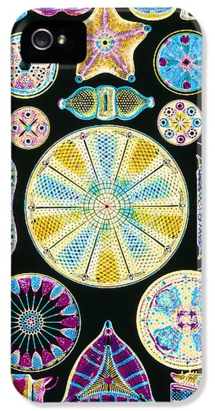 Phytoplankton iPhone 5 Cases - Art Of Diatom Algae (from Ernst Haeckel) iPhone 5 Case by Mehau Kulyk