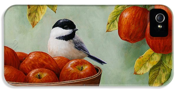 Apple iPhone 5 Cases - Apple Chickadee Greeting Card 1 iPhone 5 Case by Crista Forest