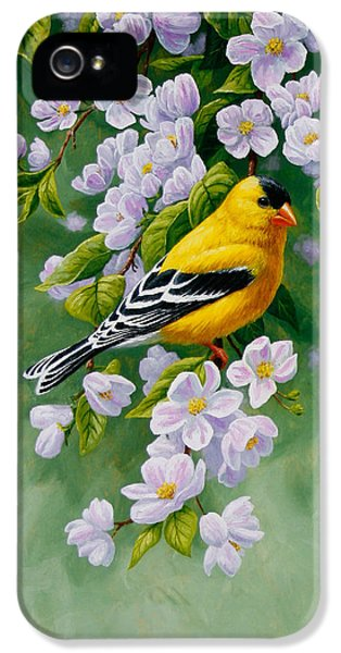 Songbird iPhone 5 Cases - American Goldfinch Spring iPhone 5 Case by Crista Forest