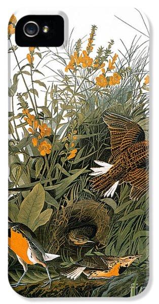 Audubon: Meadowlark IPhone 5 / 5s Case by Granger