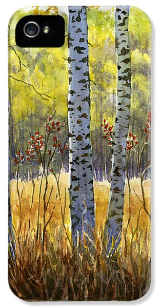 Burnt Sienna iPhone 5 Cases - Autumn Birch Trees in Shadow iPhone 5 Case by Sharon Freeman