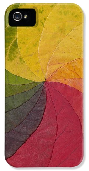 Chlorophyll iPhone 5 Cases - Autumn Leaf Colour Wheel iPhone 5 Case by David Parker