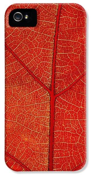 Chlorophyll iPhone 5 Cases - Autumn Leaf iPhone 5 Case by David Nunuk