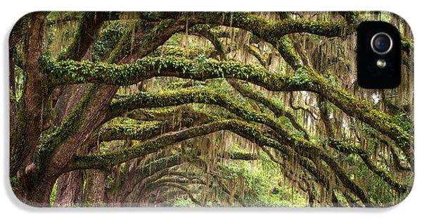 Avenue Of Oaks - Charleston Sc Plantation Live Oak Trees Forest Landscape IPhone 5 / 5s Case by Dave Allen