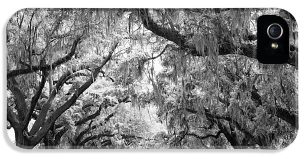 Historic Oak iPhone 5 Cases - Avenue of Oaks Charleston South Carolina iPhone 5 Case by Stephanie McDowell