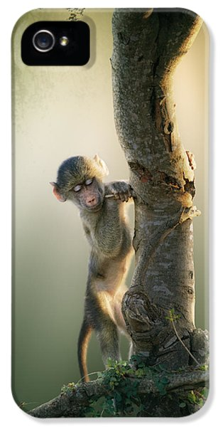 Playful iPhone 5 Cases - Baby Baboon in Tree iPhone 5 Case by Johan Swanepoel