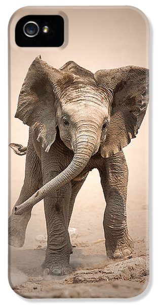 Playful iPhone 5 Cases - Baby Elephant mock charging iPhone 5 Case by Johan Swanepoel