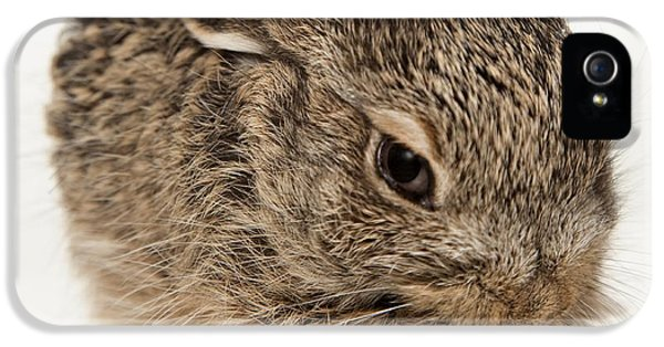 Jackrabbit iPhone 5 Cases - Baby Rabbit Cleaning Himself iPhone 5 Case by Leah Hammond