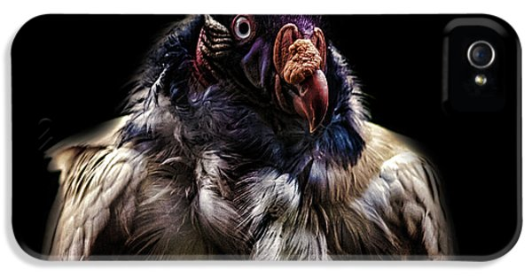 Bad Birdy IPhone 5 / 5s Case by Martin Newman