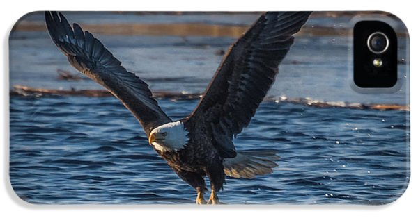 Bird Watcher iPhone 5 Cases - Bald Eagle With Fish iPhone 5 Case by Paul Freidlund