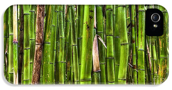Bamboo IPhone 5 / 5s Case by Dustin K Ryan