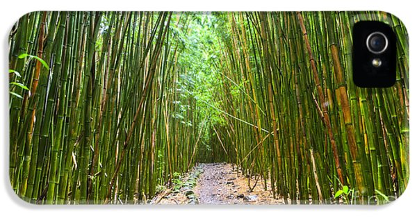 Bamboo Forest Trail Hana Maui 2 IPhone 5 / 5s Case by Dustin K Ryan
