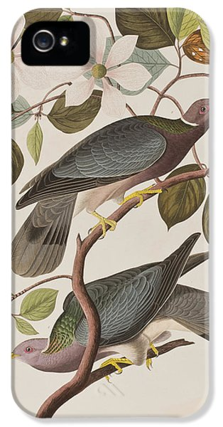 Feeding iPhone 5 Cases - Band-tailed Pigeon  iPhone 5 Case by John James Audubon