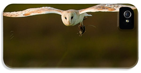Barn iPhone 5 Cases - Barn Owl iPhone 5 Case by Paul Neville