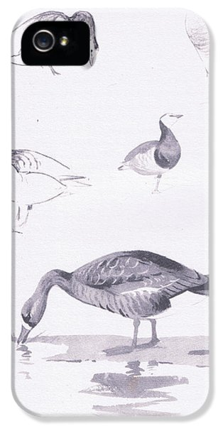 Barnacle And White Fronted Geese IPhone 5 / 5s Case by Archibald Thorburn