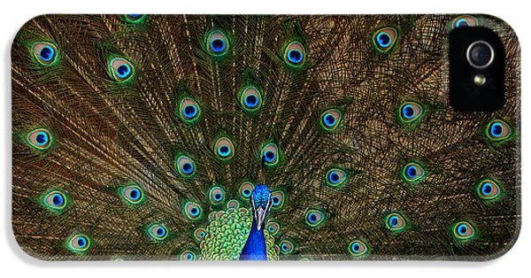 Zoo iPhone 5 Cases - Beautiful Peacock iPhone 5 Case by Larry Marshall