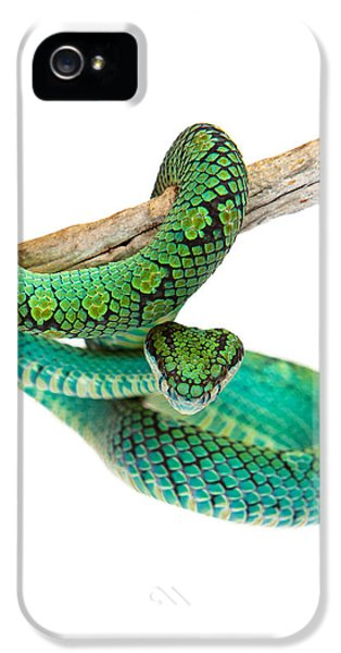 Poisonous iPhone 5 Cases - Beautiful Sri Lankan Palm Viper iPhone 5 Case by Susan  Schmitz