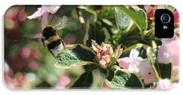 Orsillo iPhone 5 Cases - Bee iPhone 5 Case by Christopher Valentine