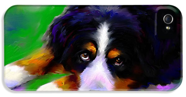 Order iPhone 5 Cases - Bernese mountain dog portrait print iPhone 5 Case by Svetlana Novikova