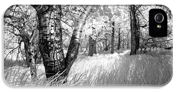 Infrared iPhone 5 Cases - Birch in the Tall Grass iPhone 5 Case by Dan Jurak