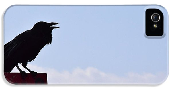 Crow Profile IPhone 5 / 5s Case by Sandy Taylor