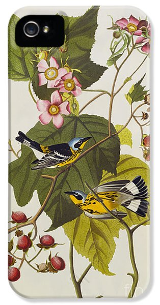 Black And Yellow Warbler IPhone 5 / 5s Case by John James Audubon