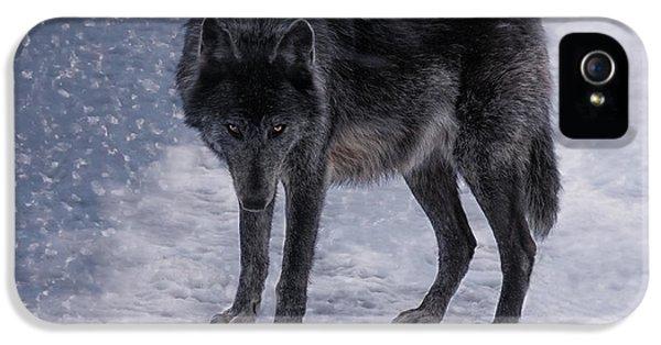 Black She-wolf IPhone 5 / 5s Case by Joachim G Pinkawa