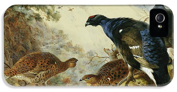 Blackgame Or Black Grouse IPhone 5 / 5s Case by Archibald Thorburn