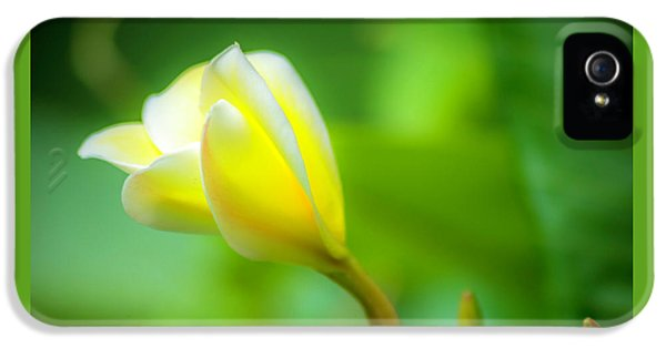 Blooming Yellow IPhone 5 / 5s Case by Marvin Spates