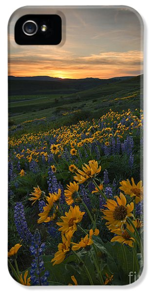 Lupine iPhone 5 Cases - Blue and Gold Sunset iPhone 5 Case by Mike Dawson