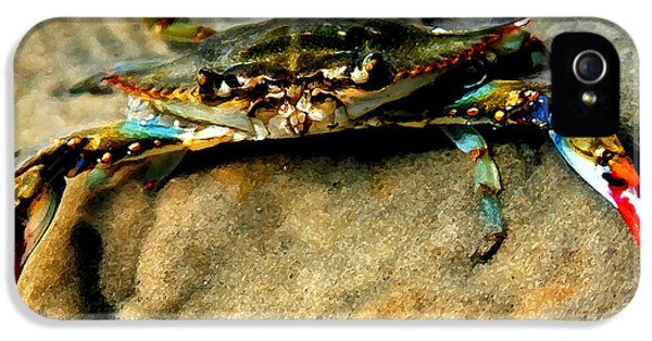 Blue Crab iPhone 5 Cases - Blue Crab iPhone 5 Case by Joan McCool