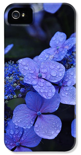 Water Drop iPhone 5 Cases - Blue Hydrangea iPhone 5 Case by Noah Cole