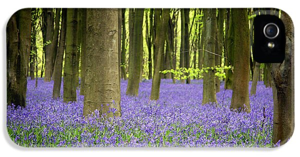 Foliage iPhone 5 Cases - Bluebells iPhone 5 Case by Jane Rix