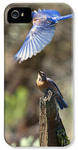 Bluebird Buzz IPhone 5 / 5s Case by Mike Dawson