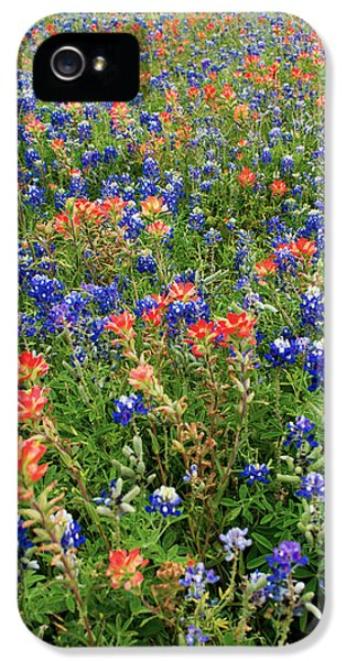 Bluebonnets iPhone 5 Cases - Bluebonnets and Paintbrushes 3 - Texas iPhone 5 Case by Brian Harig