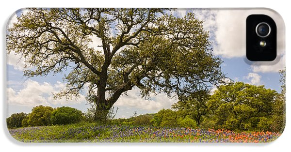 Bluebonnets Paintbrush And An Old Oak Tree - Texas Hill Country IPhone 5 / 5s Case by Brian Harig