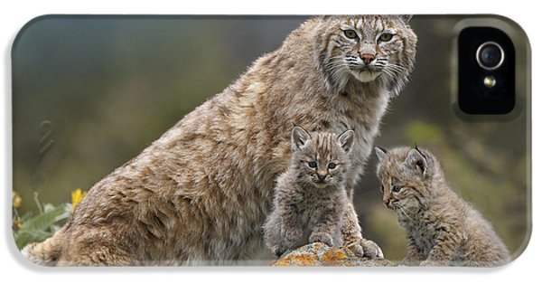 Bobcat Mother And Kittens North America IPhone 5 / 5s Case by Tim Fitzharris