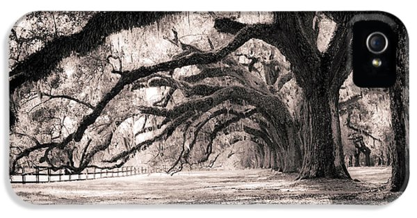 Trees iPhone 5 Cases - Boone Hall Plantation Live Oaks iPhone 5 Case by Dustin K Ryan